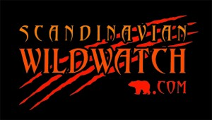 scandinavianwildwatch